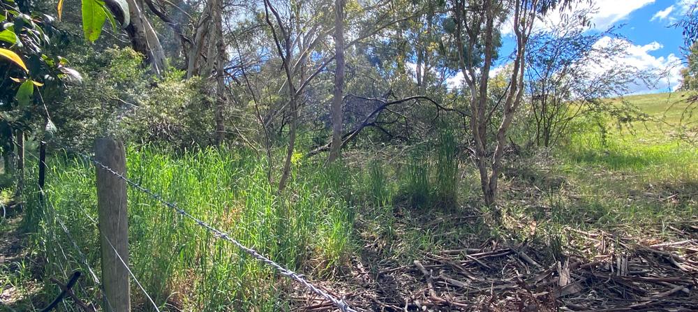 Overgrown vegetation in the Adelaide Hills