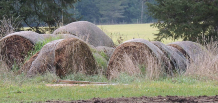 Rotton mouldy hay is a bushfire and animal health risk